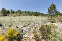 Landschaft in De Arriba Cañadas de Haches Stockfotografie