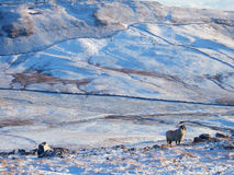 Landschaft in den Yorkshire-Tälern Lizenzfreie Stockfotografie