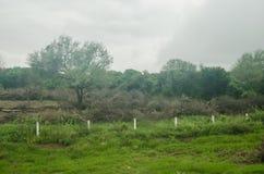 Landschaft der Abholzung eines Naturwalds, des Kontrastes des Leben oder Tod der Flora und der Fauna stockfotos