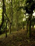 Landschaft der Bäume des Waldes Stockfotos