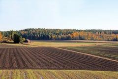Landschaft der bebauten Herbst-Felder Stockbild