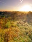 Landschaft der Dünen und der Bäume im Nebel. Stockfotos