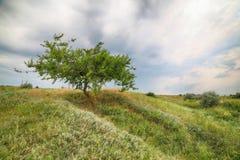 Landschaft - der einsame Baum Stockbilder