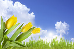 Landschaft der Frühlingsblumen auf blauem Himmel Stockbilder