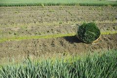 Landschaft der Gemüsefeldlandschaft Stockbild