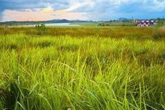 Landschaft der grünen Rasenfläche mit Rollbahnhintergrund Lizenzfreie Stockfotos