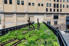 Landschaft der hohen Linie Städtischer allgemeiner Park auf einer historischen Frachtbahnstrecke, New York City, Manhattan Stockbild