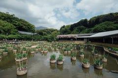 Landschaft der japanischen Art des schönen und bunten Gartens in der Summe Lizenzfreies Stockfoto