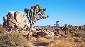 Landschaft der Joshua-Bäume und der Felsen Stockfoto