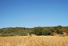 Landschaft in der Kanarischen Insel Lizenzfreie Stockbilder