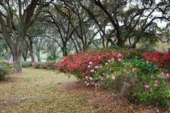 James-Insel-Straßenrand-Azalee und Live Oak-Garten Stockfoto