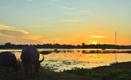 Landschaft in der Natur lizenzfreie stockfotos