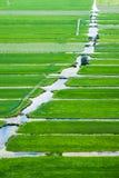 Landschaft der Niederlande Lizenzfreies Stockbild