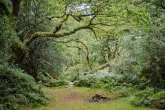 Landschaft der Reinigung im alten Waldland Lizenzfreies Stockbild