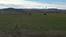 Landschaft der Schönheits-4K der grünen Landschaft mit Berg an einem heißen Tag in Spanien stock video footage
