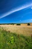 Landschaft in der Sommerzeit Stockbild