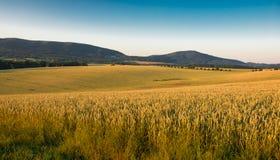 Landschaft an der Sonne mit Feldern und Bäumen Stockfotos