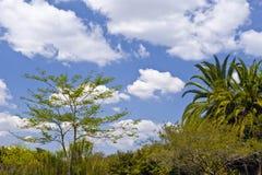 Landschaft der tropischen Bäume Stockfotografie