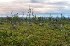 Landschaft der Tundra bei Sonnenuntergang, Finnmark, Norwegen Lizenzfreie Stockbilder