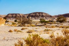 Landschaft der Wüste, trockenes Flussbett stockbild