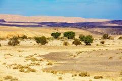 Landschaft der Wüste, trockenes Flussbett lizenzfreie stockfotos