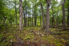 Landschaft der Wald- und Baumstämme Shevelev Stockbilder