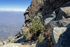 Landschaft der Wanderung La-Campana National-Parks in Mittel-Chile, S?damerika stockfoto