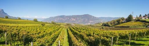 Landschaft der Weinberge des Trentino Alto Adige in Italien Der Weinweg Stockfotografie