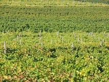 Landschaft der Weinberge des Trentino Alto Adige in Italien Der Weinweg Lizenzfreie Stockfotografie