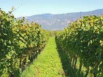 Landschaft der Weinberge des Trentino Alto Adige in Italien Der Weinweg Lizenzfreies Stockfoto
