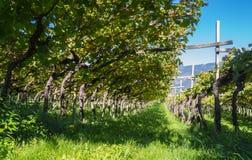 Landschaft der Weinberge des Trentino Alto Adige in Italien Der Weinweg Stockfoto