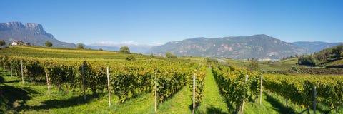 Landschaft der Weinberge des Trentino Alto Adige in Italien Der Weinweg Lizenzfreie Stockbilder
