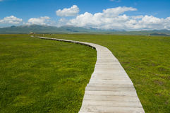 Landschaft der Wiese an der tibetanischen Hochebene Lizenzfreies Stockbild