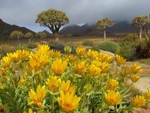 Landschaft der wilden Blume Stockfotografie