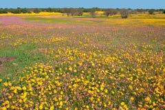 Landschaft der wilden Blume Stockbilder
