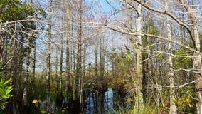 Landschaft der Wildnis im Everglades-Nationalpark, Florida, USA stock footage