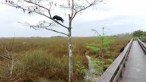 Landschaft der Wildnis im Everglades-Nationalpark, Florida, USA stock video footage