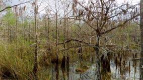 Landschaft der Wildnis im Everglades-Nationalpark, Florida, USA stock video