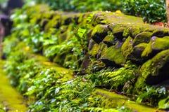 Landschaft des Affe-Waldes, Ubud, Bali, Indonesien Lizenzfreie Stockfotografie