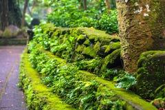Landschaft des Affe-Waldes, Ubud, Bali, Indonesien Stockfoto