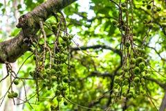 Landschaft des Affe-Waldes, Ubud, Bali, Indonesien Lizenzfreies Stockbild