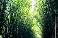 Landschaft des Bambusbaums im tropischen Regenwald lizenzfreie stockbilder