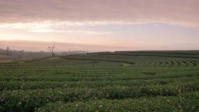 Landschaft des Bauernhofes des grünen Tees morgens Lizenzfreies Stockbild