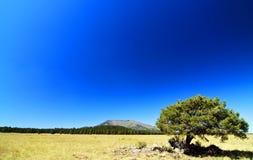 Landschaft des Baums auf dem Gebiet mit blauem Himmel Lizenzfreie Stockfotografie