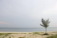 Landschaft des bewölkten Himmels und des Meeres, das Kiefer auf Strand hat Lizenzfreie Stockbilder