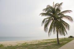 Landschaft des bewölkten Himmels und des Meeres, das Kokosnussbaum auf Strand hat Lizenzfreie Stockfotos