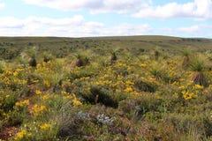 Landschaft des blühenden westlichen australischen Hinterlandes im Frühjahr Stockbild