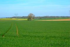 Landschaft des Briekäses (Frankreich) 2 Stockfotografie