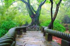 Landschaft des chinesischen Parks. Stockfoto