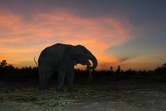 Landschaft des Elefanten mit buntem Himmel Stockbild